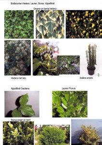 bladsoort-deel-1