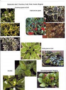 bladsoort-deel-2