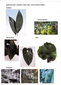 bladsoort-deel-3