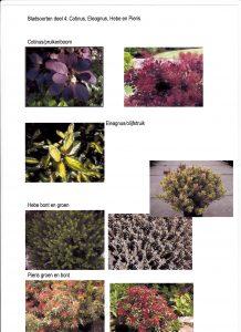 bladsoort-deel-4